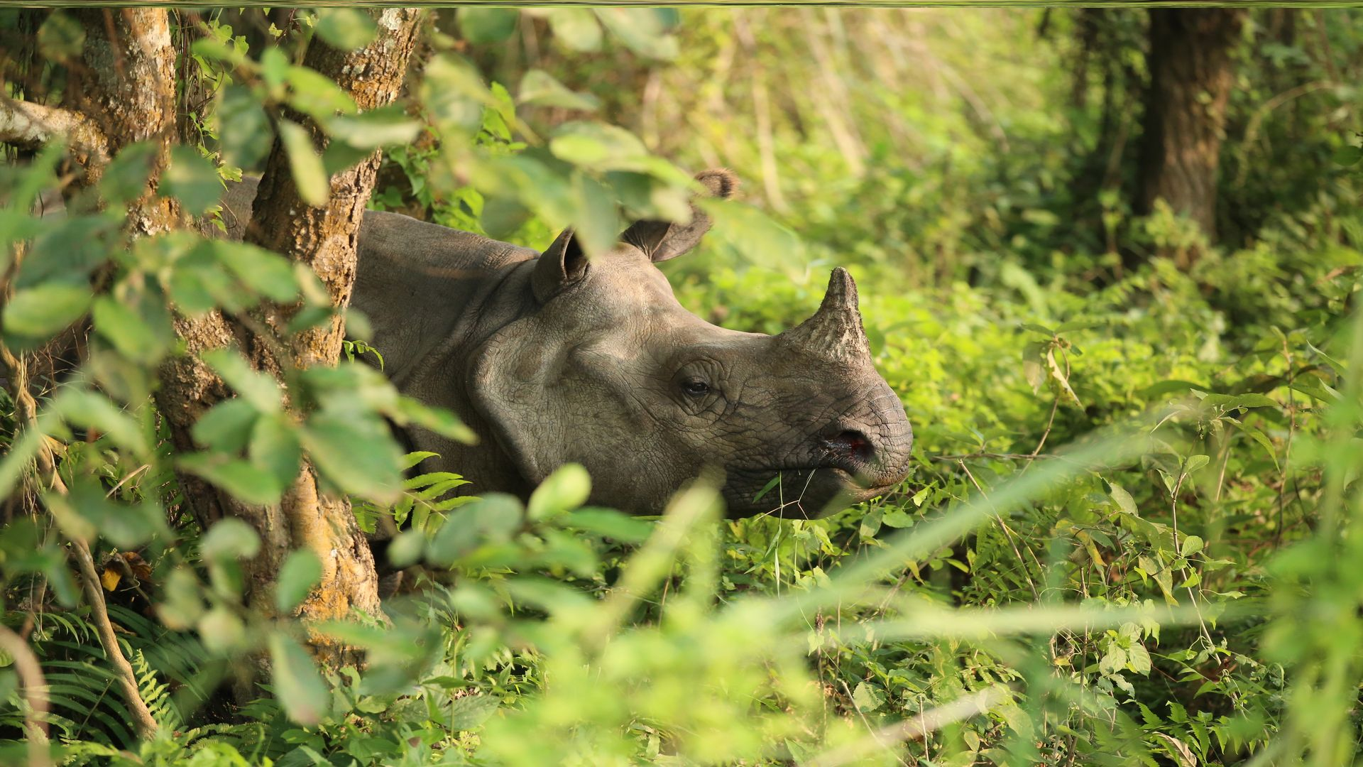 Highlights of Chitwan Tour Package